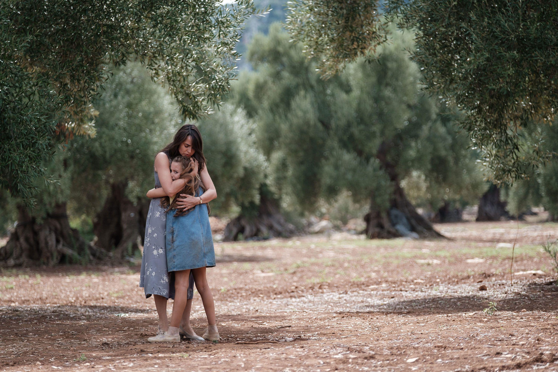 Paesaggi salentini e il campo degli ulivi