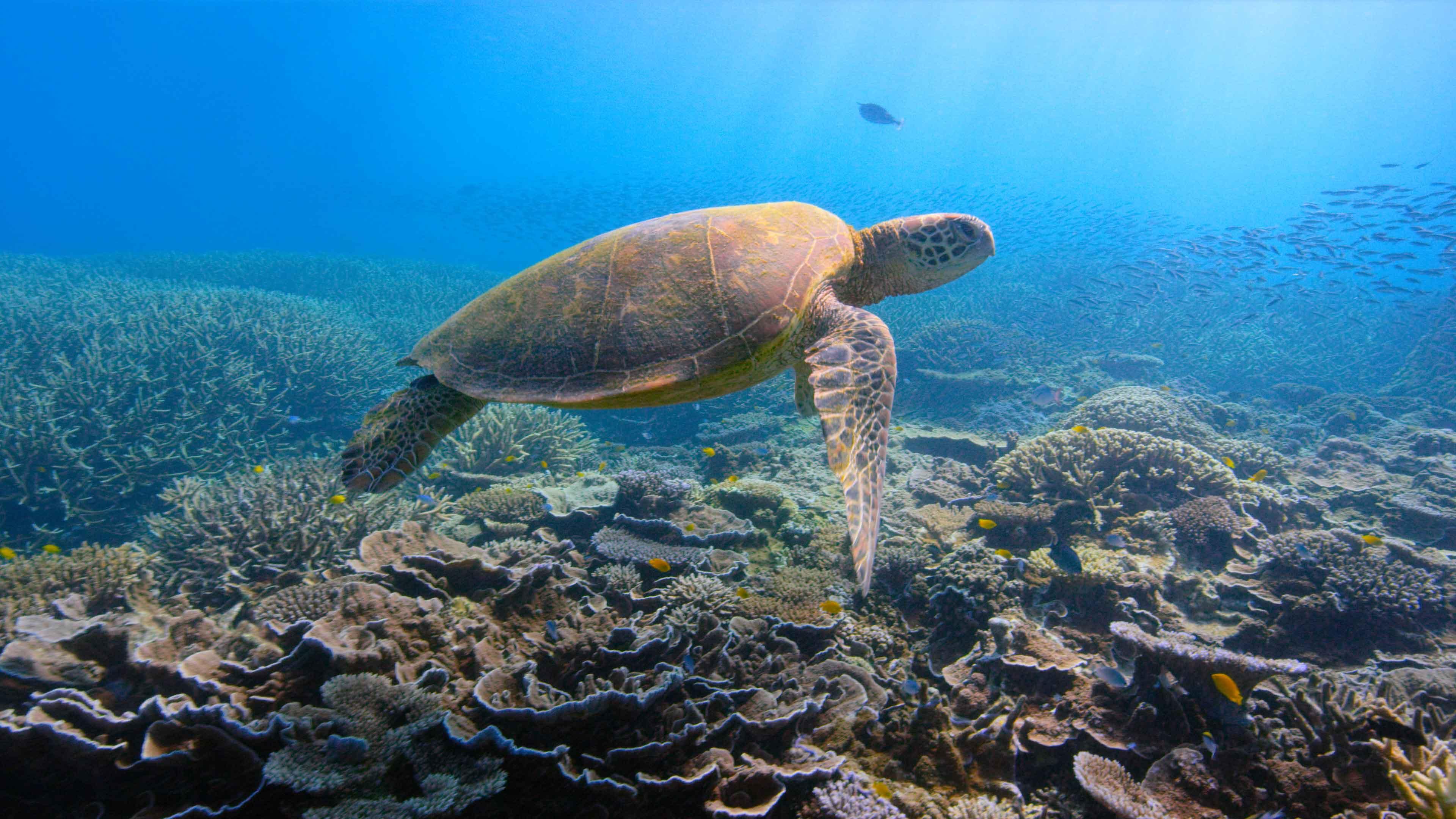 La vita sul nostro Pianeta passa dalla salute dell'Oceano